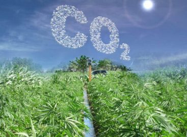 How Hemp Can Reduce Our Carbon Footprint
